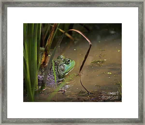 A Frog Waits Framed Print