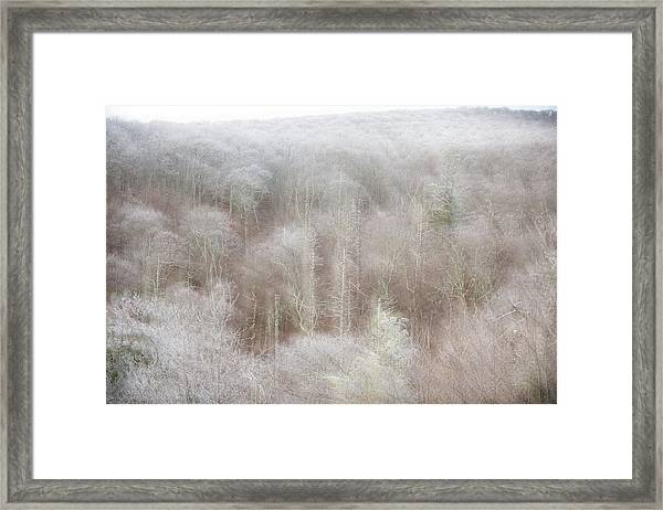 A Ghost Of Trees Framed Print