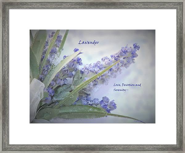 A Gift Of Lavender Framed Print