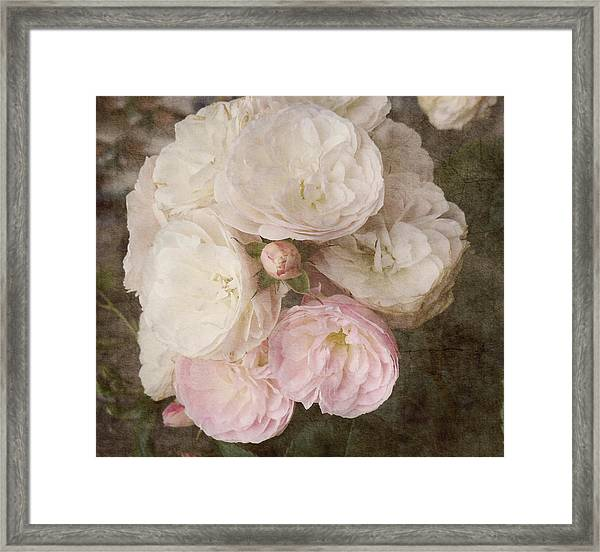 A Kiss From A Rose  Framed Print