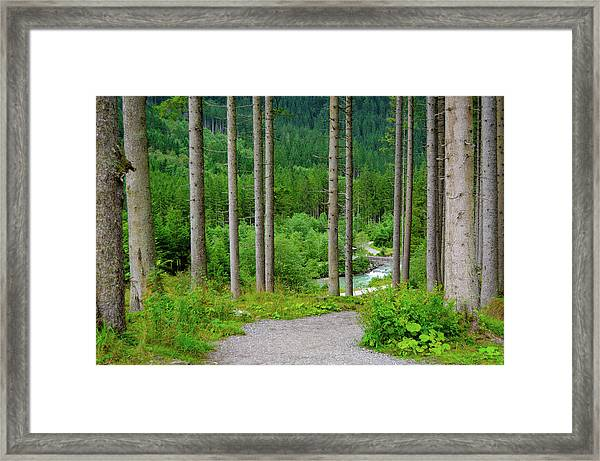 A Path To The River Framed Print