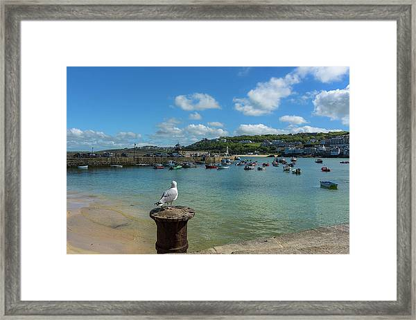 A Seagull Dreaming At The Harbour Framed Print