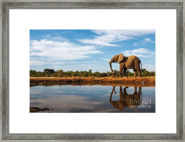 A Single Elephant Is Reflected On The Framed Print