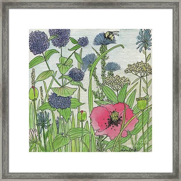 A Single Poppy Wildflowers Garden Flowers Framed Print