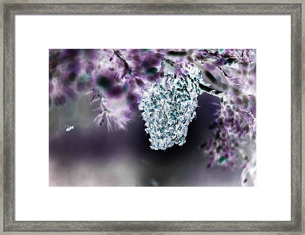 A Swarm Of Bees Framed Print