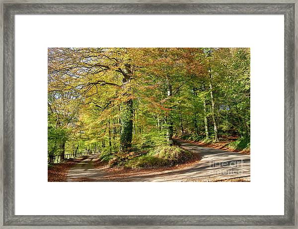 A Taste Of Autumn Framed Print