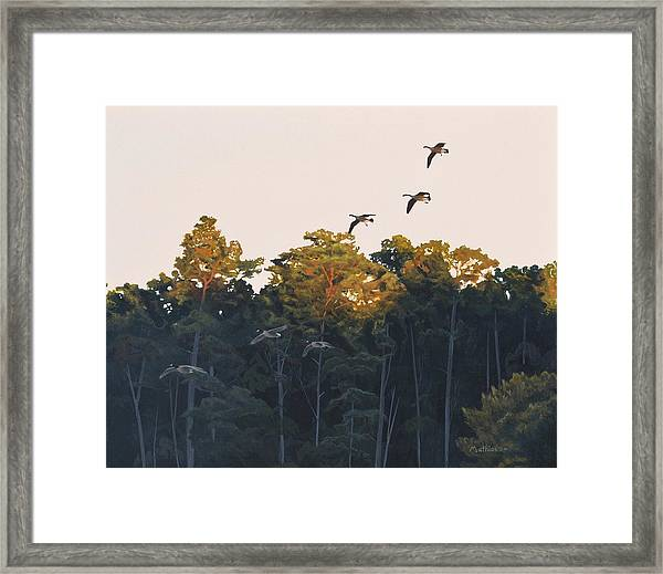 A Touch Of Gold Framed Print