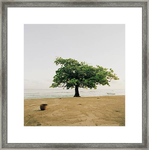A Tree On The Beach At Petit-goave Framed Print