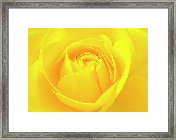 A Yellow Rose For Joy And Happiness Framed Print