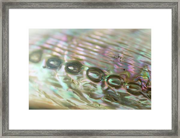 Abalone_shell_9892 Framed Print