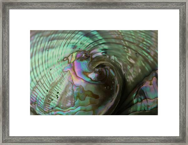 Abalone_shell_9903 Framed Print