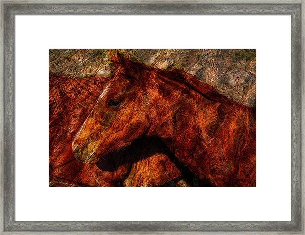 Abstract Horse Photograph Framed Print by Fernando Margolles