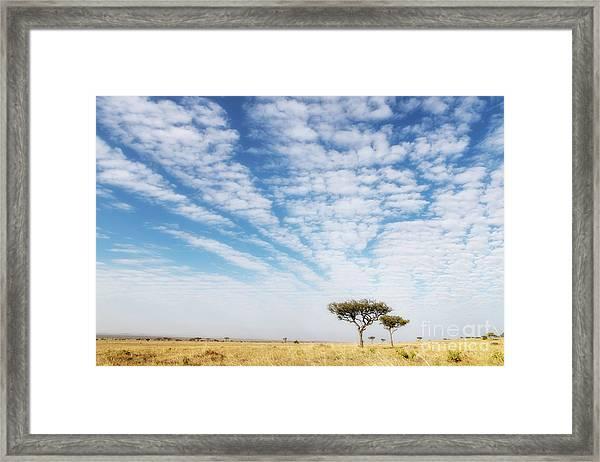 Acacia Trees In The Masai Mara Framed Print