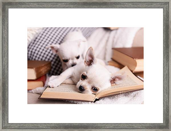 Adorable Chihuahua Dogs With Books On Framed Print