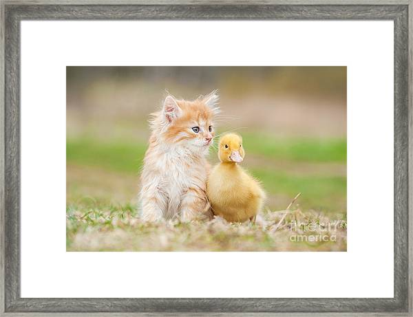 Adorable Red Kitten With Little Duckling Framed Print