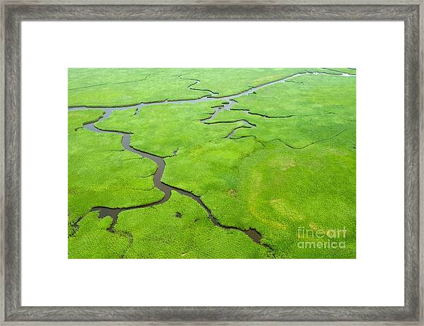 Aerial View Of Lush Coastal Wetlands Framed Print