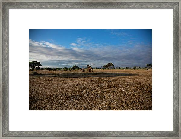 Amboseli Framed Print