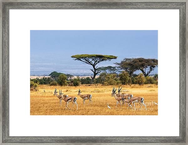 African Landscape With Gazelles Framed Print by Oleg Znamenskiy