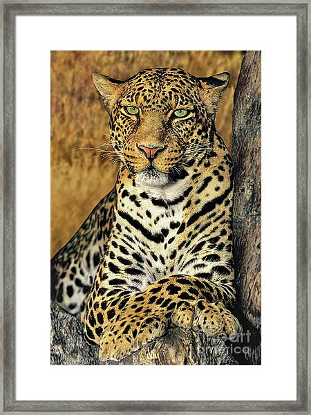 African Leopard Portrait Wildlife Rescue Framed Print