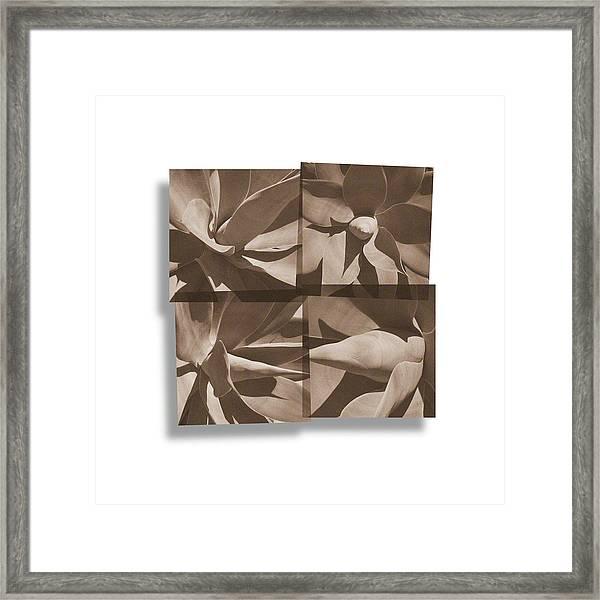 Agaves Framed Print