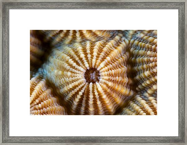 Alien Form Framed Print