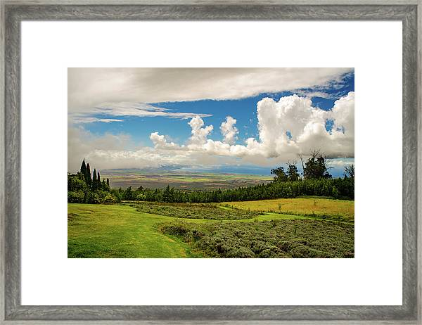 Alii Kula Lavender Farm Framed Print