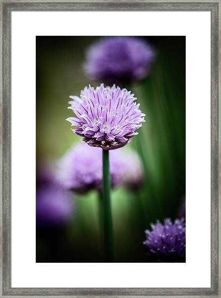 All Alone With My Thoughts Framed Print
