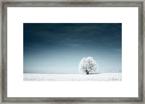 Alone Frozen Tree In Snowy Field And Framed Print