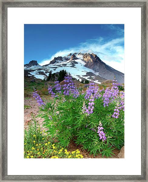 Alpenglow On Flowers And Mt. Hood Framed Print