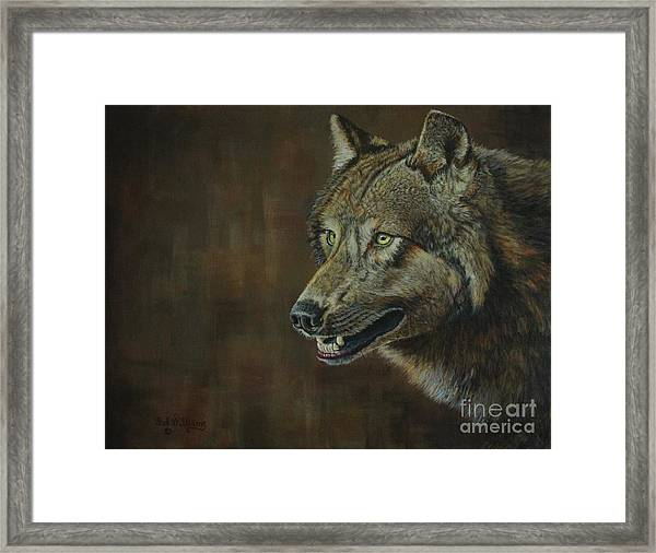 Alpha Male ......the Gray Wolf Framed Print