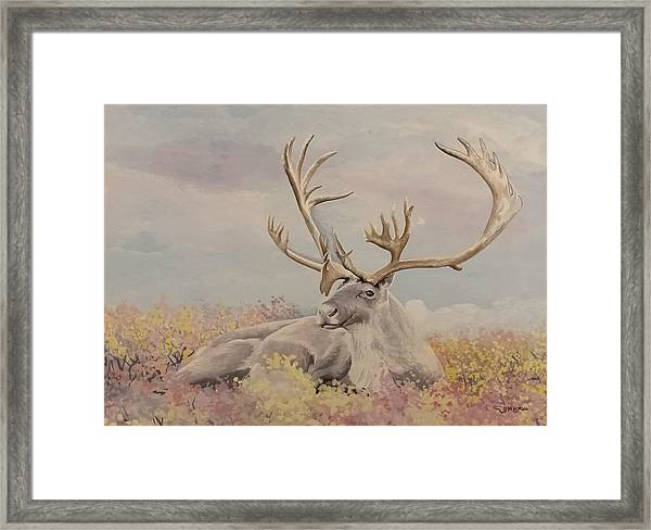 Framed Print featuring the painting Alpine Ibex by Said Marie