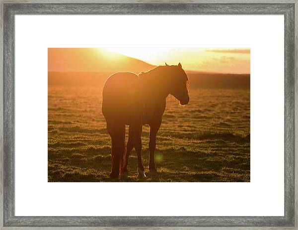 Always Shining Framed Print