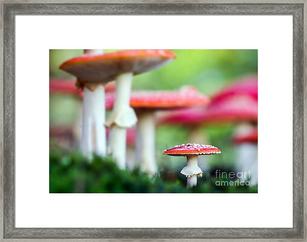 Amanita Muscaria, A Poisonous Mushroom Framed Print