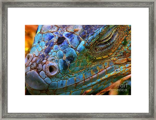Amazing Iguana Specimen Displaying A Framed Print