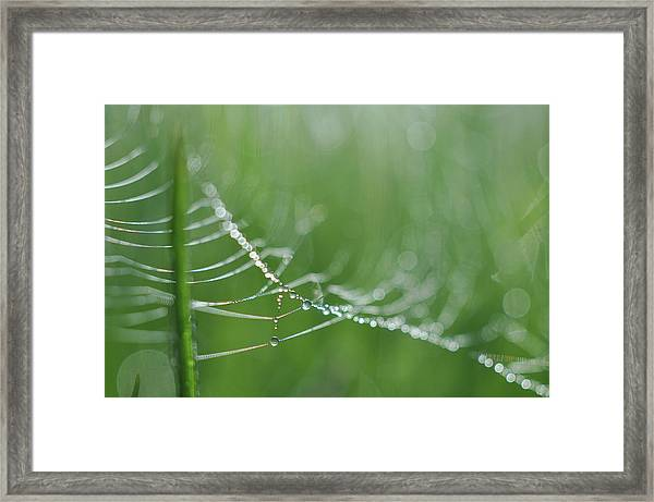 Amazing Framed Print