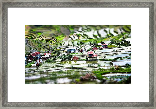 Amazing Tilt Shift Effect View Of Rice Framed Print