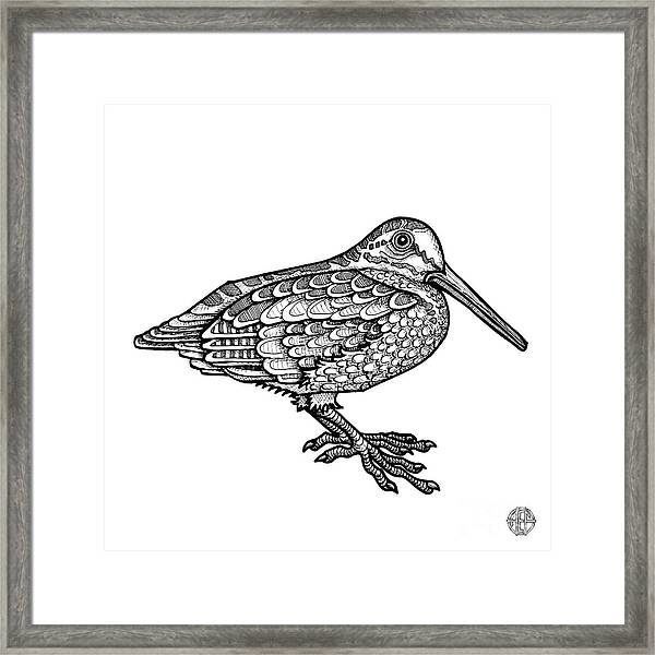 Framed Print featuring the drawing American Woodcock by Amy E Fraser