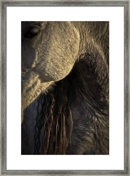 Framed Print featuring the photograph Americano 11 by Catherine Sobredo