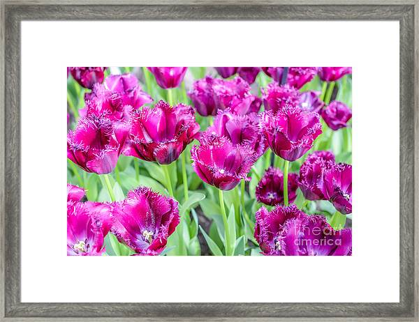 Amsterdam Flowers Framed Print