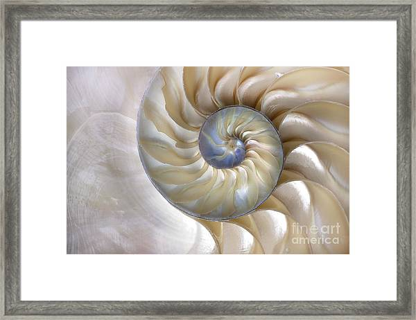An Amazing Fibonacci Pattern In A Framed Print by Tramont ana