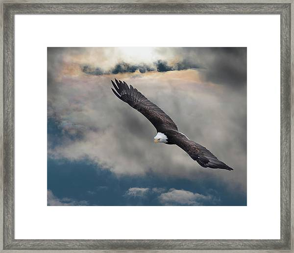 An Eagle In Flight Rising Above The Framed Print