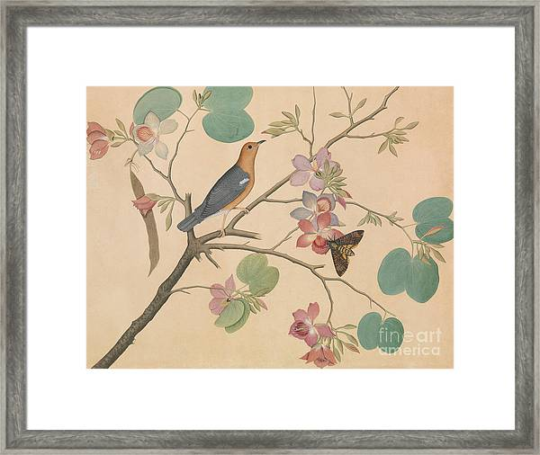 An Orange Headed Ground Thrush And A Moth On A Purple Ebony Orchid Branch, 1778 Framed Print