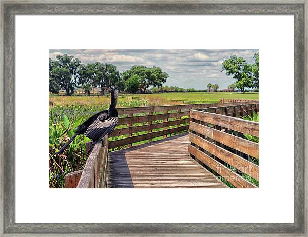 An Ahinga Moment Framed Print