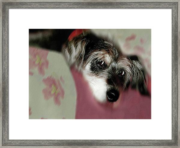 And This Is Sparky Framed Print