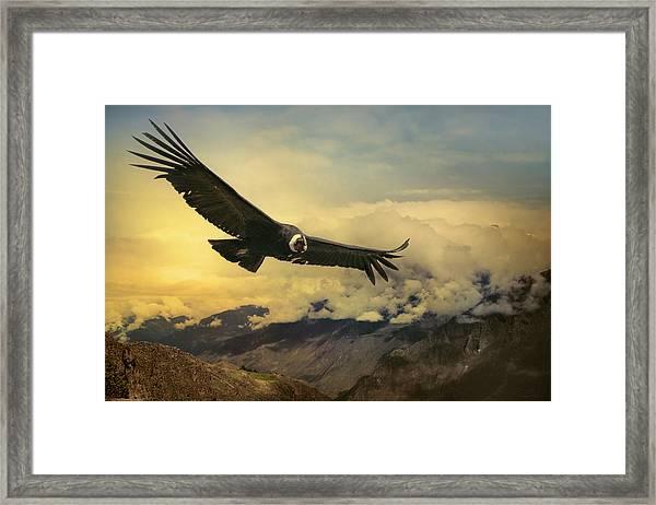 Andean Condor Framed Print by Istvan Kadar Photography