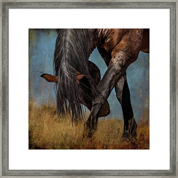 Angles Of The Horse Framed Print