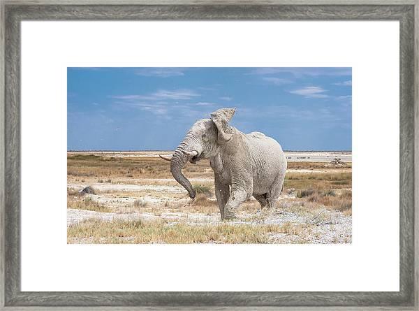 Angry Bull Framed Print