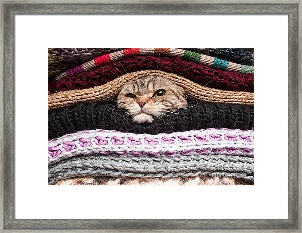 Angry Cat Is Preparing For Winter Framed Print