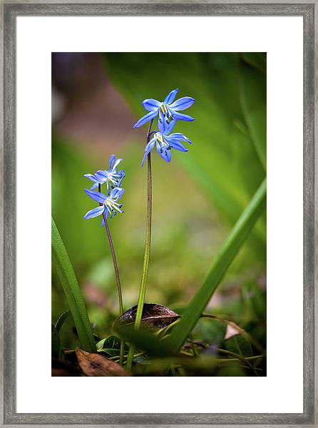 Animated Framed Print