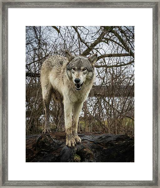 Anit I Pretty Framed Print